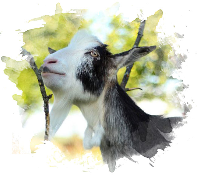 Joris the Goatling